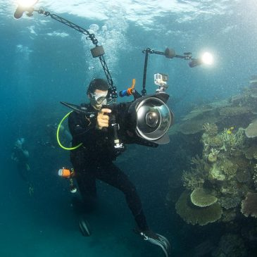 Chasing Coral Documentary on Netflix